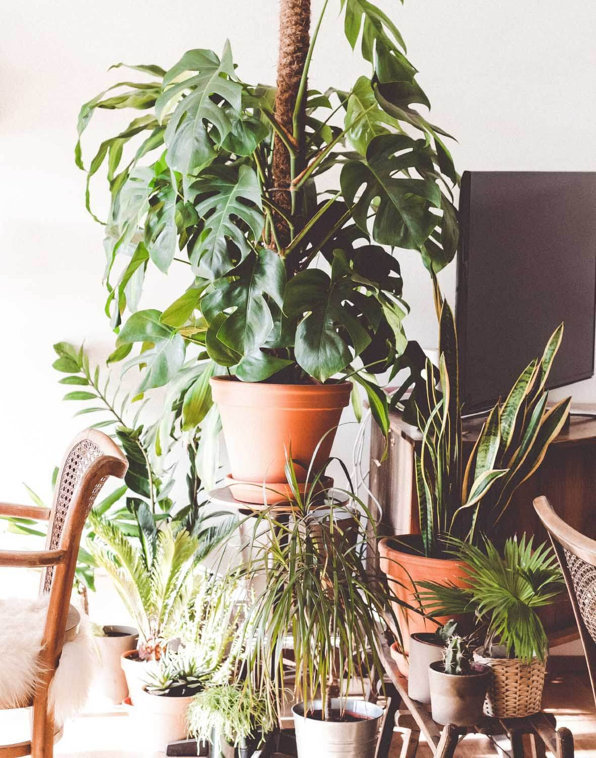 SysSiteAssets/img/article/inspiration/plants/plant_5.jpg