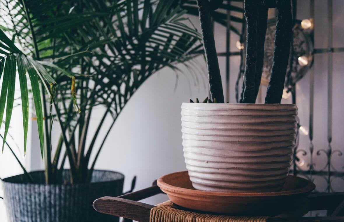 et/SysSiteAssets/img/article/inspiration/plants/plant_1.jpg