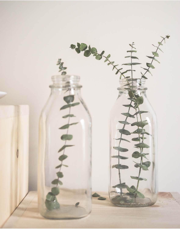 et/SysSiteAssets/img/article/inspiration/plants/plant_4.jpg