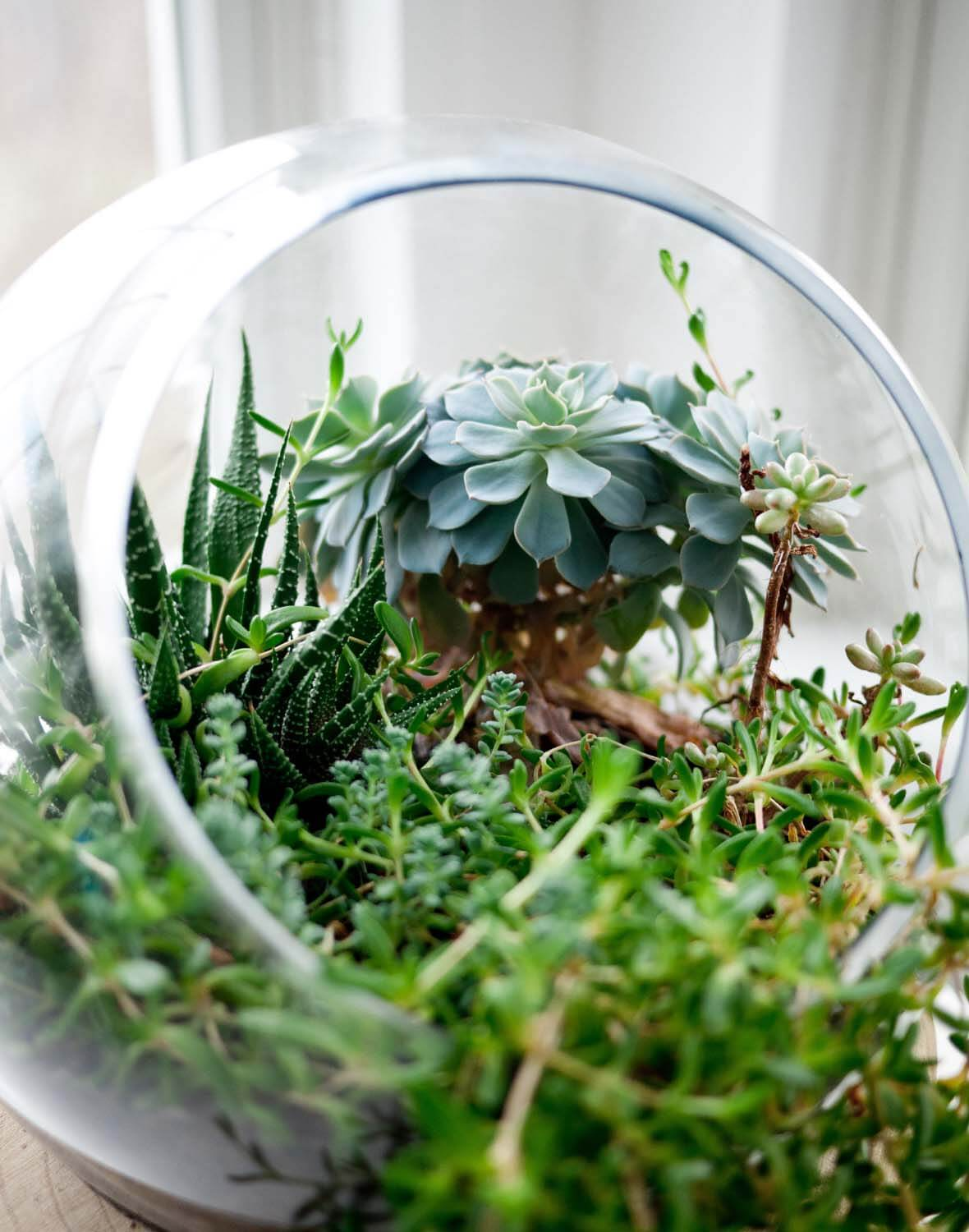siteassets/img/article/inspiration/plants/plant_3.jpg